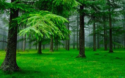 nature-green.jpg