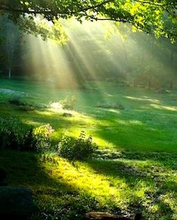 nature-indeep.jpg