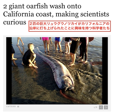 oarfish-2.jpg