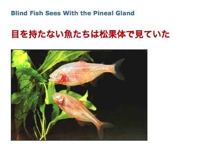 pene-mexico-fish.jpg