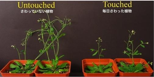 plant-01a.jpg