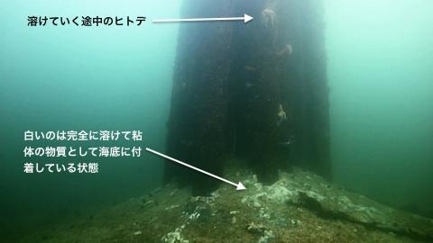 seastar-death-02.jpg