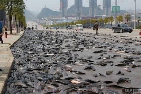 thai-fish-rain.jpg