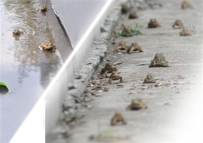toad-china-0701.jpg
