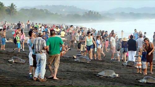 tourist-disrupt-turtle-nesting-costa-rica-01.jpg