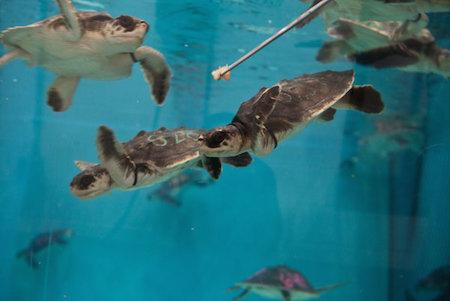 turtles-01.jpg