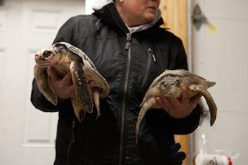 turtles-02.jpg