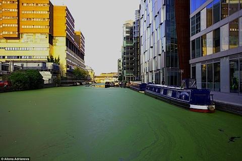 uk-algae-01.jpg