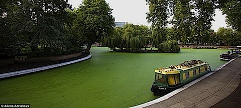 uk-algae-02.jpg