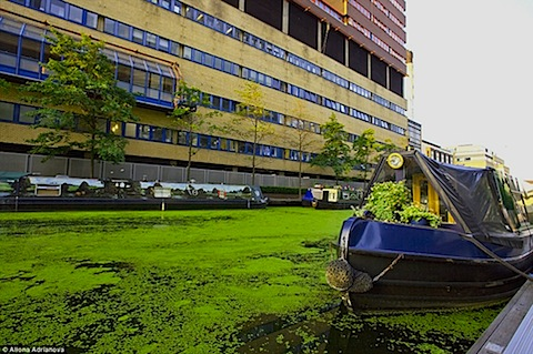 uk-algae-03.jpg