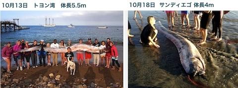 us-coast-oarfish.jpg